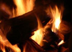legna_fuoco_biomasse_4