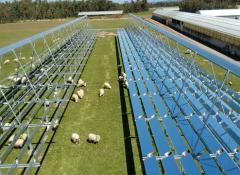agricoltura_solare_termico_pecore_1