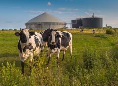 biogas_3